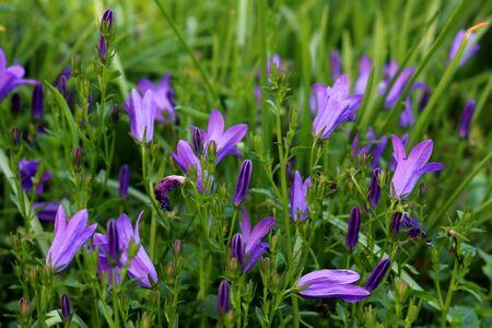 purple flowering blossoms