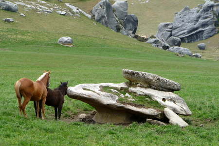 wild horses in New Zealand Standard-Bild