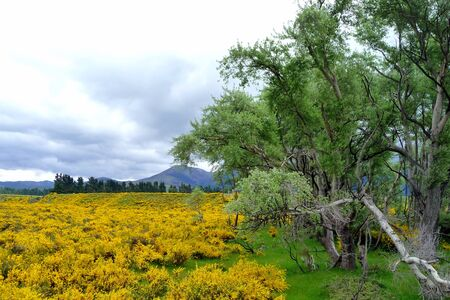 blossom yellow field