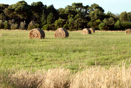 a few hay bales in a paddock