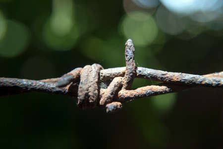 barbed wire fence: Close up of a barbed wire fence