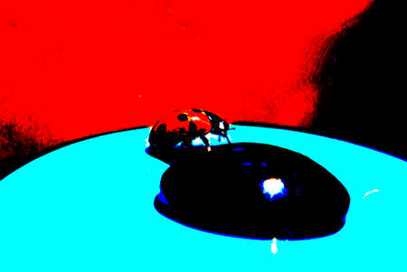 lady bug: posterised image of a lady bug