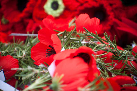 poppies and Rosemary on anzac day remembrance day