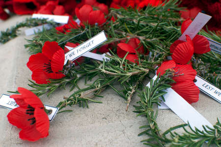 rosemary: poppies and rosemary on anzac day remembrance day