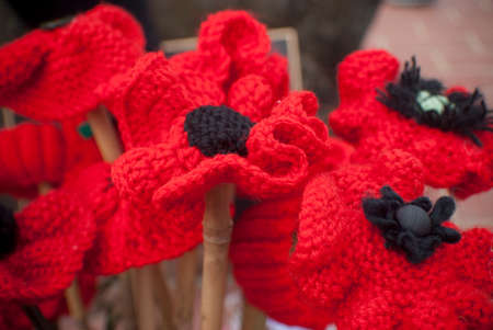Knitted Poppies On Anzac Day Remembrance Day Stock Photo Picture