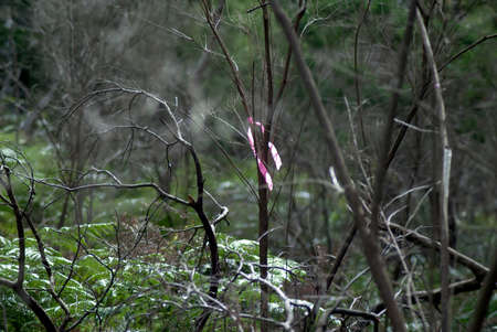 signify: pink ribbon tied to a tree, usually to signify do you cut down