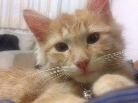 Little kitten resting on couch Фото со стока