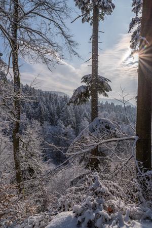 Paesaggio forestale invernale Archivio Fotografico - 96338289