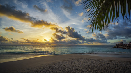 Golden sunset through a palm leaf on paradise beach on the seychelles Stock Photo