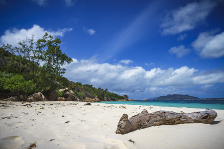 climas: Branch in the white sand on curieuse island on the seychelles