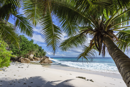 looking through a palm tree in the white sand to the indian ocean on paradise beach at anse patates, la digue, seychelles