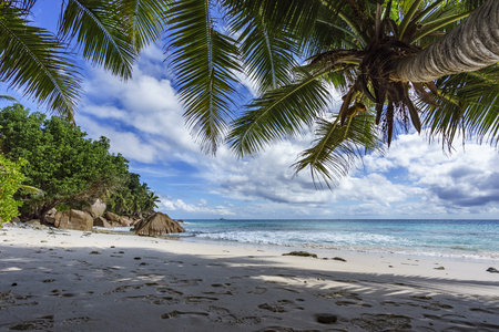 la digue: looking through a palm tree in the white sand to the indian ocean on paradise beach at anse patates, la digue, seychelles