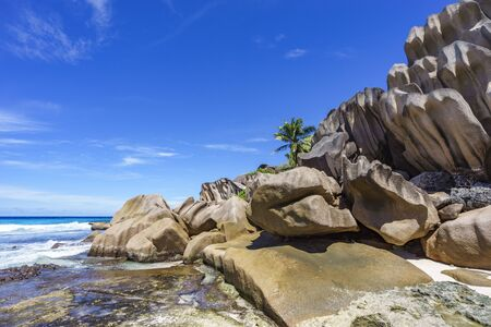 Coral reef in the white sand and big granite rocks with palm trees on it at the beautiful beach of grand anse, la digue, seychelles Stock Photo