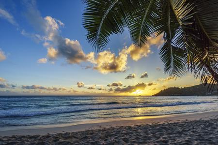 sunset at tropical beach behind palm leaf,anse intendance, seychelles, mahé