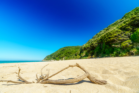 branch on a tropical beach with turquoise water and white sand in abel tasman national park, new zealand Standard-Bild - 107866067