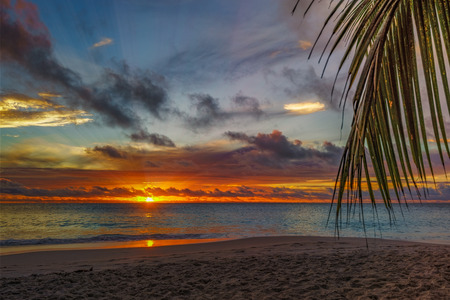 looking through a palm leaf at spectacular beautiful romantic glowing sunset on paradise beach anse georgette, praslin, seychelles