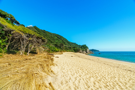 tropical beach with sand, blue sky, blue water and a wild jungle in abel tasman national park, new zealand
