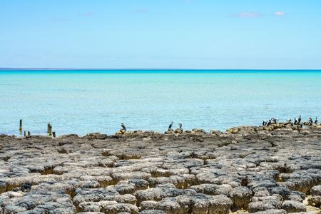 living fossils stromatolites at hamilon pool nature reserve, western australia
