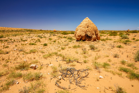 a lot of termite mounds in the desert of western australia