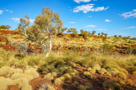 hiking in the desert to joffre gorge lookout in karijini national park, western australia Stock Photo
