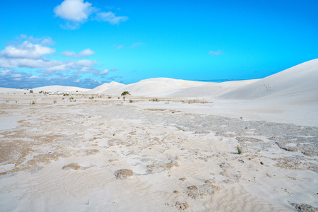 desert like white lancelin sand dunes, western australia
