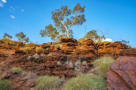 boscaglia a joffre gorge nel deserto del parco nazionale di karijini, australia occidentale