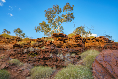 bushland at joffre gorge in the desert of karijini national park, western australia