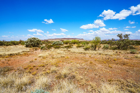 bushland in the desert of karijini national park, western australia