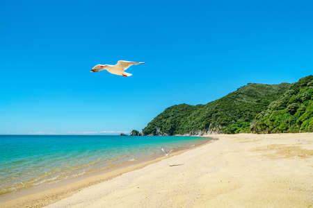 seagull on a tropical beach with turquoise water and white sand in abel tasman national park, new zealand 免版税图像