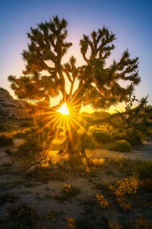 sunset at joshua tree national park, california in the usa Stok Fotoğraf