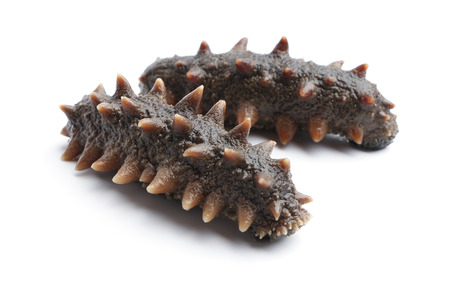 Sea cucumber is isolated on white background.