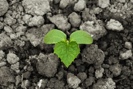 emerging economy: Young sprout is on the ground in the spring.