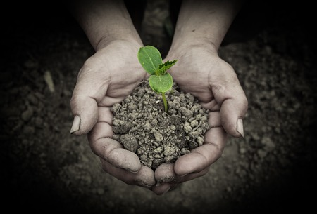 soil conservation: Young sprout is holden by hands with the ground background.