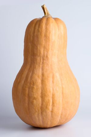 butternut squash: Butternut squash is on the white background.