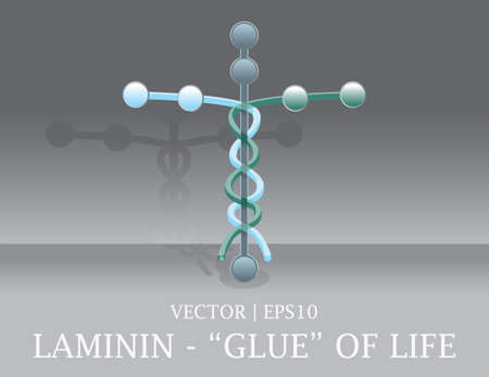 muscle cell: Laminin cell the glue of human life Christian Bible cross