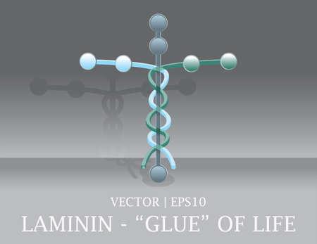 Laminin cell the glue of human life Christian Bible cross