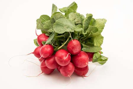 radishes: radishes with white background