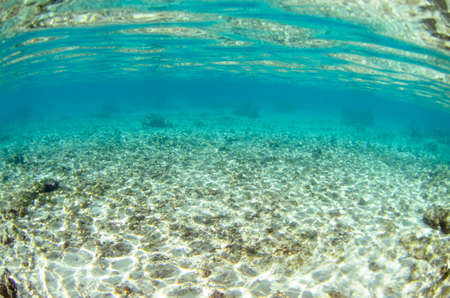 Seabed texture of Moorea in Tahiti French Polynesia
