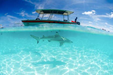 Black tip reef shark and boat Stock fotó