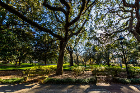 A Warm day at Forsyth Park in Savannah, Georgia Shaded by Magnolia Trees