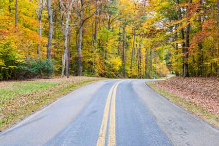 Country Road Cutting Through St Michaels in Baltimore, Maryland in Fall