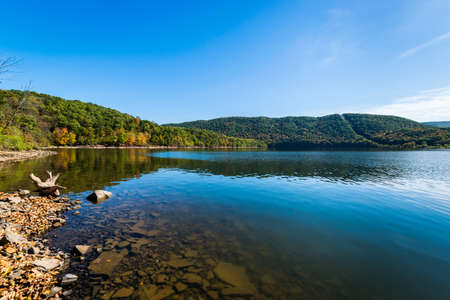 Lush Vegetation Around Raystown Lake, in Pennsylvania During Summer
