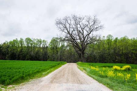 남부 카운티 카운티 펜실베니아 주위 무성 한 농지의 풍경