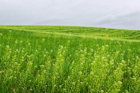 amish: Landscape. Stock Photo