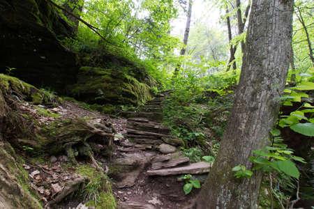 펜실베니아에있는 Poconos에있는 Ricketts Glen 주립 공원의 경치
