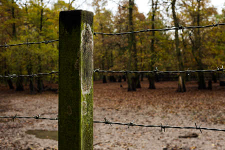 delimit: Barbed wire fence in the forest