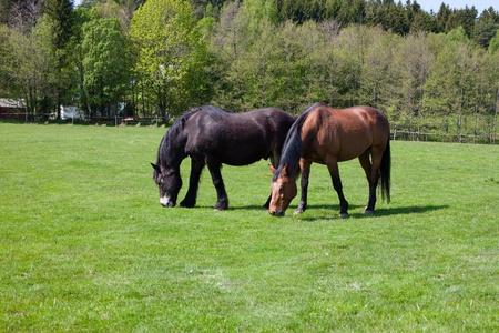 Horses grazing Imagens