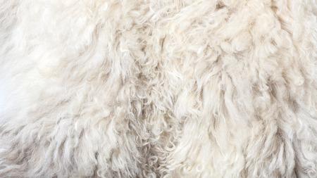 merino sheep: Sheepskin