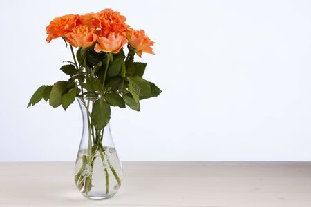 rosas naranjas: Rosas de color naranja en el florero de vidrio transparente
