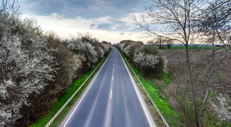 Road to Horizon Springtime Blossom Cold Look